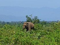 Eléphant-Uda Walawe National Park (6).jpg