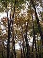 Elmore State Park (4287397771).jpg