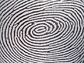 Elongated whorl without the deltas in a right thumbprint.jpg