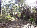 Engadine NSW 2233, Australia - panoramio (178).jpg