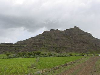 Eritrean Highlands - Teff field at the base of a small hill in the Eritrean Highlands.