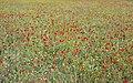 Esplendor primaveral en el campo (47993194143).jpg