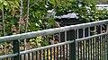 European Robin (Erithacus rubecula) - Nesodden, Norway 2020-09-20.jpg