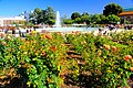 Exposition Park Rose Garden, Exposition Blvd. at Vermont Ave. University Park 11.jpg