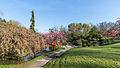 Fête des cerisiers 2015 - Toulouse - 7802.jpg