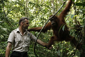 Frankfurt Zoological Society - FZS Programm Director Peter Pratje working with orangutans in Bukit Tigapulu, Indonesia.