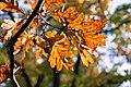 Fall Colors, Minneapolis (29823877054).jpg