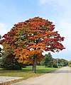 Fall Foliage, Day Road, York Township, Michigan - panoramio.jpg