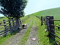 Farm track - geograph.org.uk - 484147.jpg