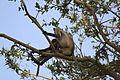 Fauna.Parque nacional Ranthambore. Rajasthan..JPG