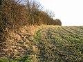 Field boundary along Singledge Lane - geograph.org.uk - 637285.jpg