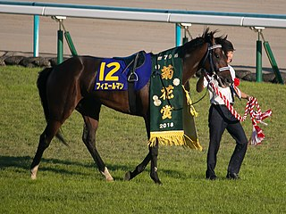 Fierement Japanese-bred Thoroughbred racehorse