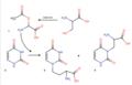 Figure 2. Biosynthesis of Willardiine and Isowillardiine .png