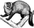 Fisher (PSF).png
