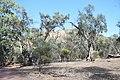 Flinders Ranges SA 5434, Australia - panoramio (72).jpg
