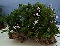 Flower-center130816.jpg