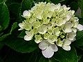 Flower20180523 101107.jpg