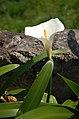 Flower (553740577).jpg
