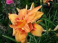 Flower 100 1694.jpg