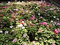 Flowers in Empress Botanical Garden Pune 2.jpg