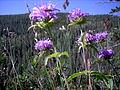 Flowers in the sun3.JPG