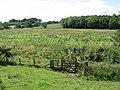 Footbridge across Long Nanny - geograph.org.uk - 756609.jpg