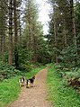 Footpath in Eymore Wood - geograph.org.uk - 1512292.jpg