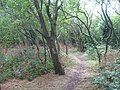 Footpath through Hillyfields Orchard, Gillingham - geograph.org.uk - 1408963.jpg