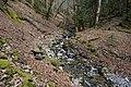 Forêt @ Alex (51097552936).jpg