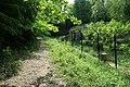 Forêt domaniale de Bois-d'Arcy 14.jpg