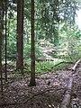 Forbach Übergang Nadel- in Laubwald.jpg