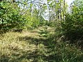 Forest Track - geograph.org.uk - 2638214.jpg