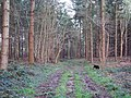 Forest Track at the Harewarren - geograph.org.uk - 309429.jpg