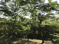 Forest in Kamado Shrine.jpg