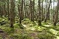 Forest in Yatsugatake 33.jpg
