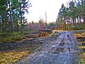 Forestry operations in Wyre Forest - geograph.org.uk - 1067026.jpg