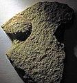 Fossiliferous sandstone (Vinton Member, Logan Formation, Lower Mississippian; Toboso East railroad cut, Licking County, Ohio, USA) 2 (30781521553).jpg