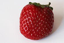 https://upload.wikimedia.org/wikipedia/commons/thumb/a/a4/Fragaria_-_Frutilla_-_Strawberry_-_20070318.jpg/220px-Fragaria_-_Frutilla_-_Strawberry_-_20070318.jpg