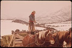 Frank Starbuck, Last of the Old Time Ranchers near Fairview Manages a Spread of 1300 Acres and 400 Head of Cattle. He Does It Alone Because It Is Too Difficult and Expensive to Get Help, 10-1972 (3815035387).jpg