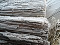 Frozen Wood - panoramio.jpg