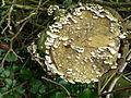 FungiMarchHilden.JPG