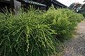Gangoji10st3200.jpg