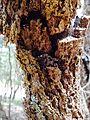 Garden Orb Weaver.jpg