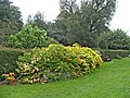 Garden at Forty Hall, Enfield - geograph.org.uk - 731150.jpg