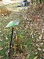Gardenology.org-IMG 7291 qsbg11mar.jpg