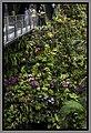 Gardens by the Marina Bay - Dome Flowers-13 (8353171488).jpg