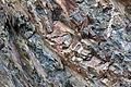 Gesteine am Ufer der Urft im Nationalpark Eifel-3536.jpg