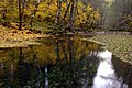 Gifford Pinchot NF Fall color in Wind River (23303081144).jpg