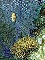 Glover's Reef 2-15 (32490202404).jpg