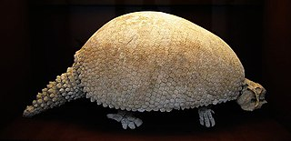 <i>Glyptodon</i> An extinct genus of mammals belonging to the armadillo order of xenarthrans